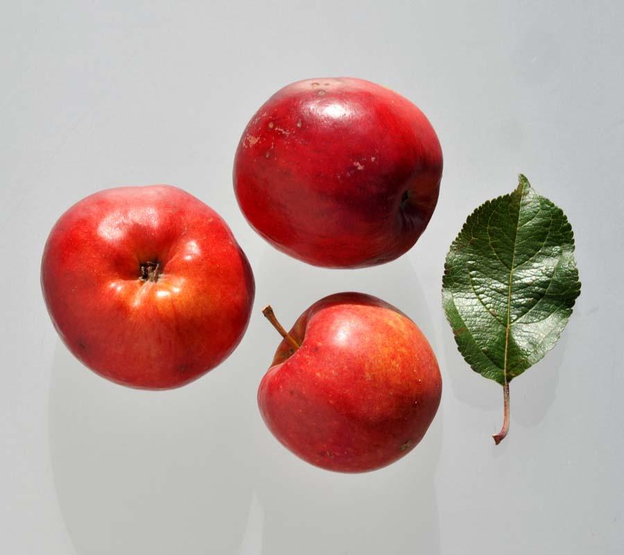 фото яблоко прима